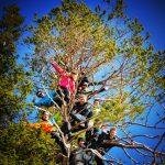 Vefsn Folkehøgskole Toppen Friluftsliv i treet
