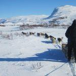 Friluftsliv lett -  Hundekjøring