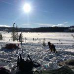Alaskan Husky i sol