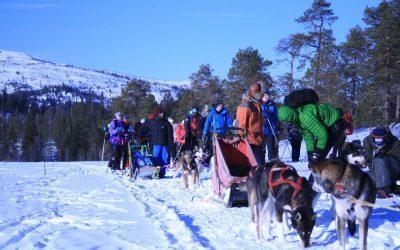 Ski, kiting og hundekjøring