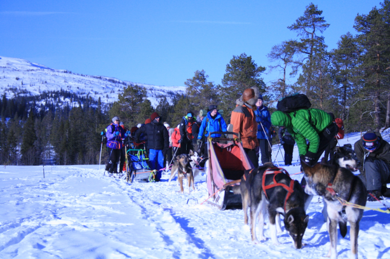 Hundekjøring og elever på folkehøgskole i sol og vintersnø