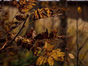 Blader, naturbilde, høst farger