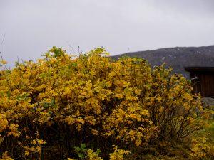 Høst farger, naturbilde