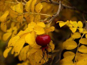 naturbilde, høst farger