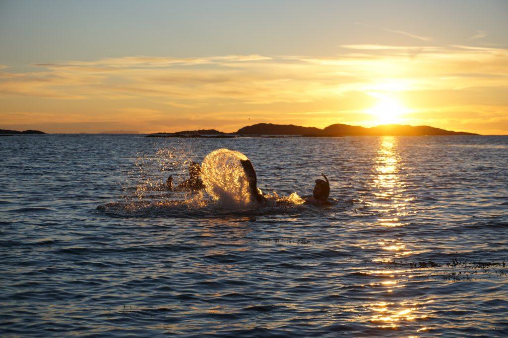 Dykking i solnedgang på Helgelandskysten
